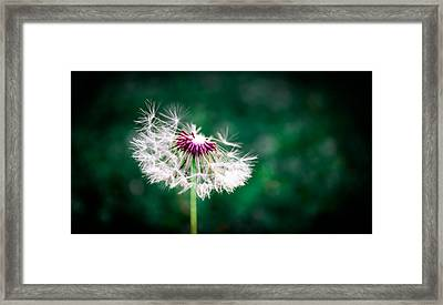 Make A Wish Framed Print by Shelby  Young