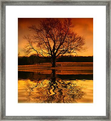 Making The Most Of Your Time Alone Framed Print by Daphne Sampson