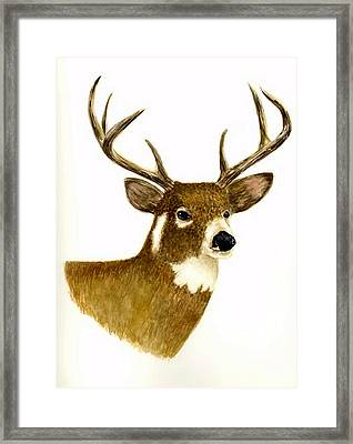 Male Deer Framed Print by Michael Vigliotti