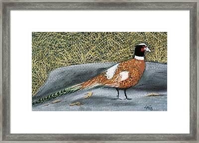 Male Pheasant Framed Print by Jan Amiss