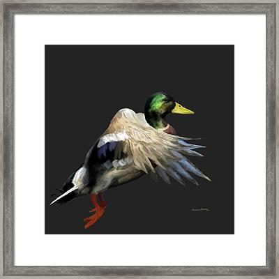 Mallard Freehand 1 Framed Print by Ernie Echols