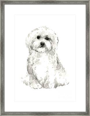 Maltese Abstract Dog Poster Framed Print by Joanna Szmerdt