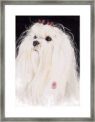 Maltese Framed Print by Debra Jones