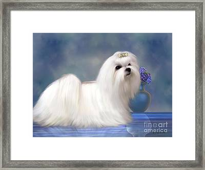 Maltese Dog Framed Print by Corey Ford