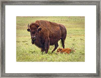 Mama Watching Over Baby Framed Print by Tamyra Ayles
