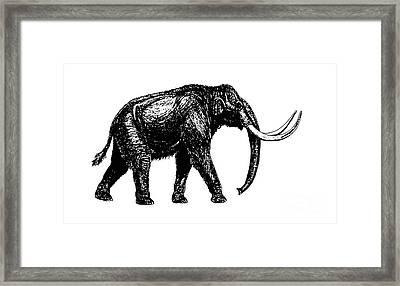 Mammoth Tee Framed Print by Edward Fielding