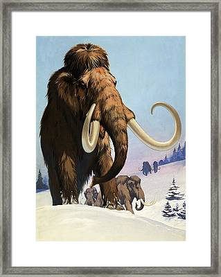 Mammoths From The Ice Age Framed Print by Angus McBride