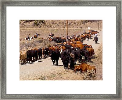 Mancos Valley Cattle Drive Framed Print by FeVa  Fotos