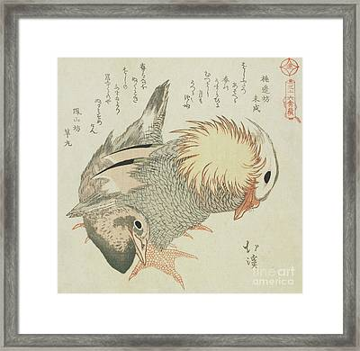 Mandarin Duck And Drake Framed Print by Toyota Hokkei