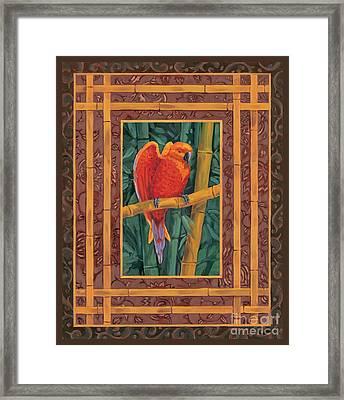 Mandarin Lovebird Framed Print by Paul Brent