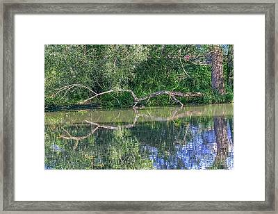 Mandarines And Branch  Framed Print by Leif Sohlman