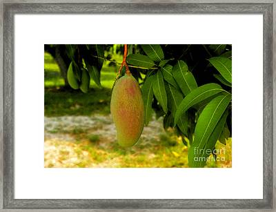 Mango Work Number One Framed Print by David Lee Thompson
