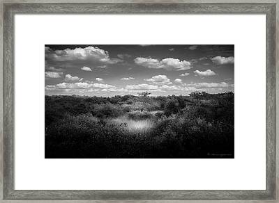 Mangrove Clearing Framed Print by Marvin Spates