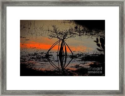 Mangrove Silhouette Framed Print by David Lee Thompson
