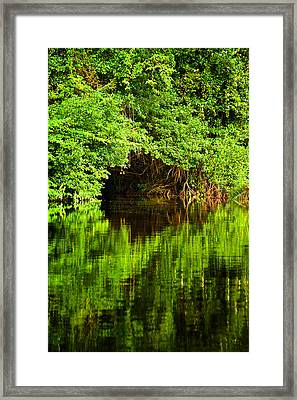Mangrove Tunnel Framed Print by Sarita Rampersad