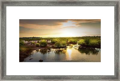 Mangroves Forest  Framed Print by Louloua Asgari