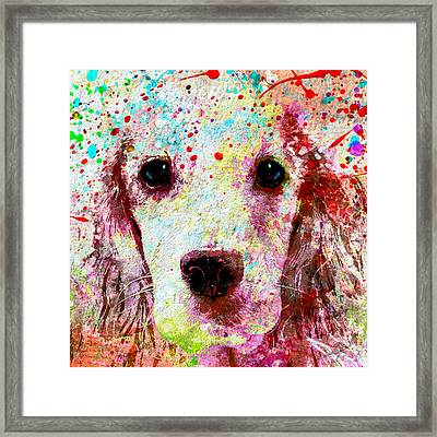 Man's Best Friend  Framed Print by Stacey Chiew