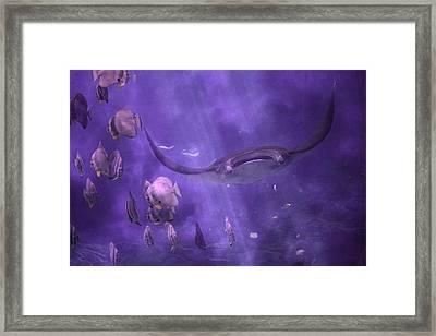 Manta Birostris Framed Print by Betsy Knapp