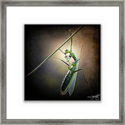 Mantis 26 Framed Print by Ingrid Smith-Johnsen