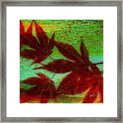 Maple Leaf 2 Framed Print by Paul Gaj
