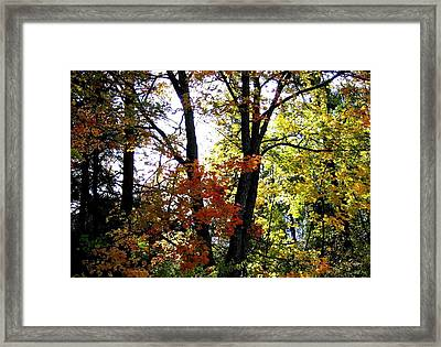 Maple Mania 16 Framed Print by Will Borden