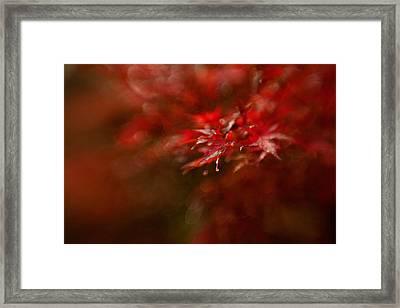 Maple Framed Print by Mel Brackstone