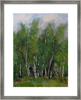 Maple Ridge Birch Trees Framed Print by David Patterson