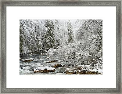 March Snow Cranberry River Framed Print by Thomas R Fletcher