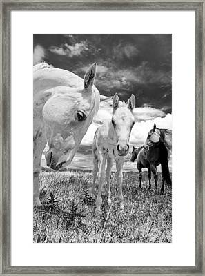 Mare With Colt Framed Print by Charles Frates