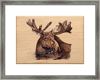 Marsh Moose Framed Print by Ron Haist