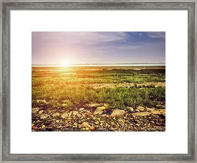 Marshland Framed Print by Wim Lanclus