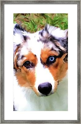 Mary's Puppy A Framed Print by Gary Grayson