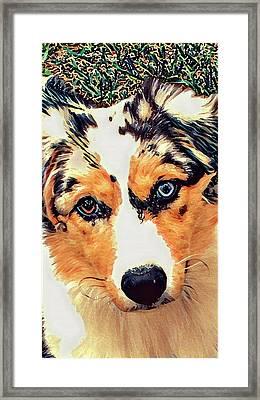 Mary's Puppy B Framed Print by Gary Grayson