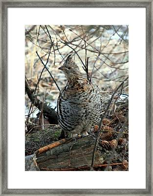 Master Of Camouflage Framed Print by Eric Knowlton
