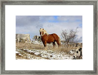 Master Of The Field Framed Print by Frederic Vigne