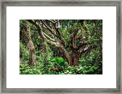 Maui Jungle Framed Print by Kelley King