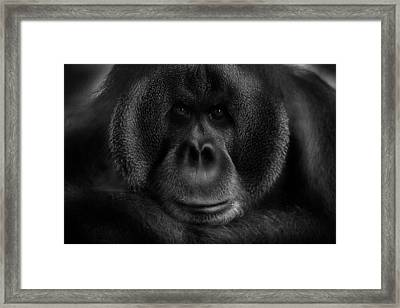 Maurice Framed Print by Kay