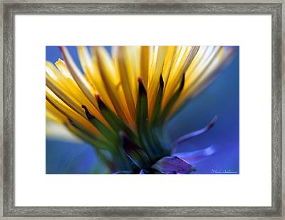 Mcro Blue Framed Print by Mark Ashkenazi