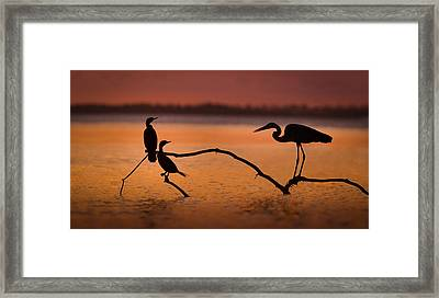Meeting At Sunset Framed Print by Jean-luc Besson