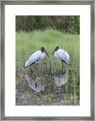 Meeting Of The Minds Framed Print by Carol Groenen