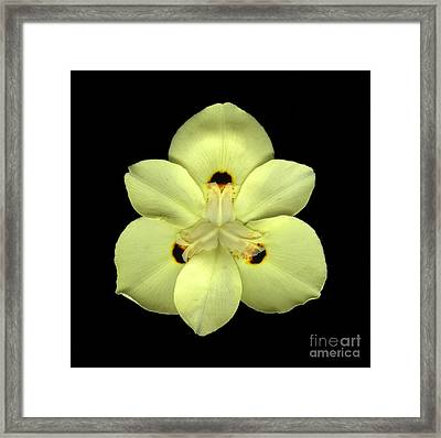 Mellow Yellow Framed Print by Christian Slanec