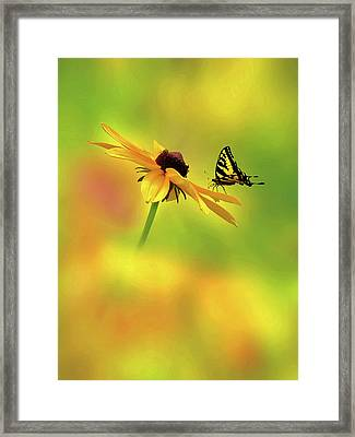 Mellow Yellow Framed Print by John Poon