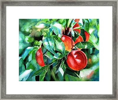 Melocotones- Peaches Framed Print by Maria Balcells