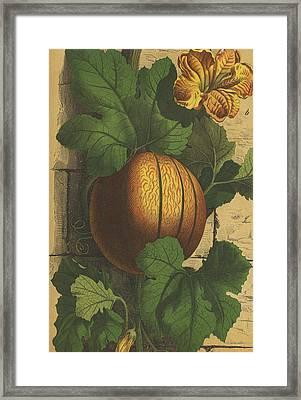 Melon, Vine And Flower Framed Print by German Engraver