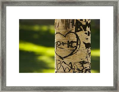 Memories In The Aspen Tree Framed Print by James BO  Insogna