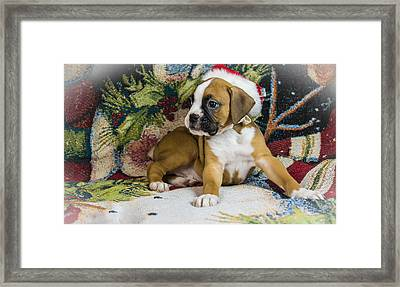 Merry Christmas From Oscar The Boxer 1 Framed Print by George Kenhan