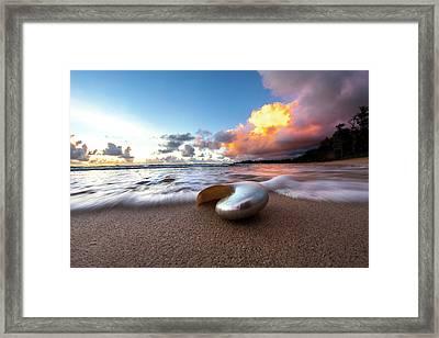Metal Nautilus Framed Print by Sean Davey