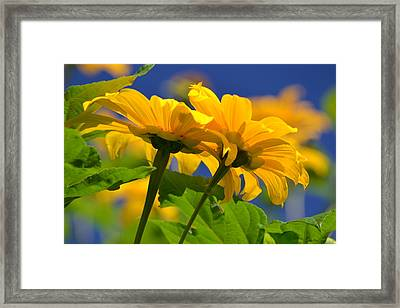 Mexican Sunflower Tree Framed Print by Melanie Moraga