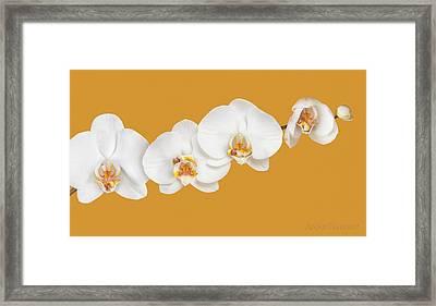Mia, Nakeeta, Mia & Phoenix In Moth Orchids Framed Print by Anne Geddes