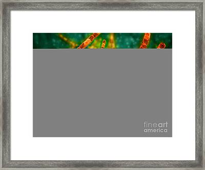 Microscopic View Of Anthrax Framed Print by Stocktrek Images